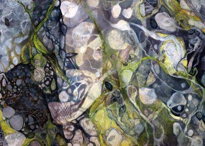 Sea Kelp and Shells